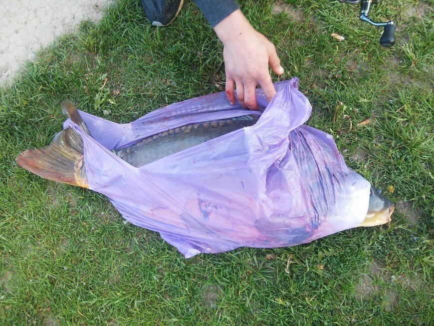 В Івано-Франківському озері рибалка спіймав 10-кілограмового коропа