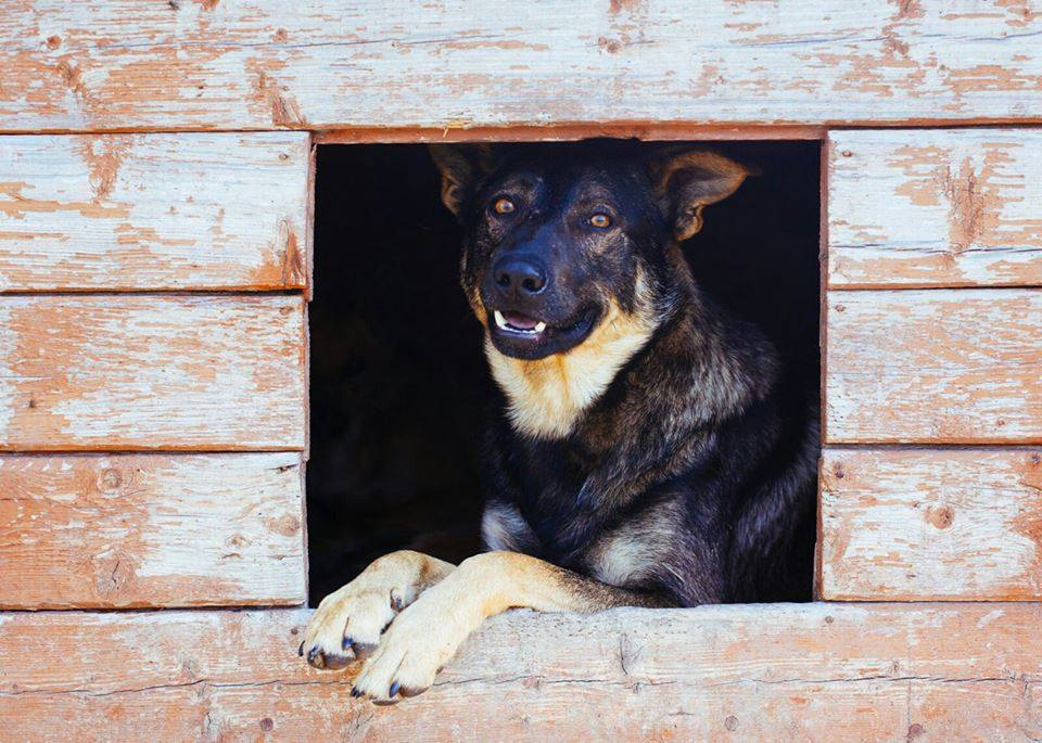 Через погрози селян будівництво нового притулку для собак відбувається під охороною муніципальної варти. Фото